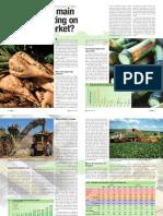Sugar Beet vs Sugarcane