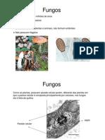 Microsoft Power Point - Fungos