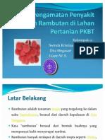 pengamatan penyakit penting tanaman Rambutan. IPB.