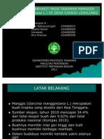 pengamatan penyakit tanaman manggis. IPB.
