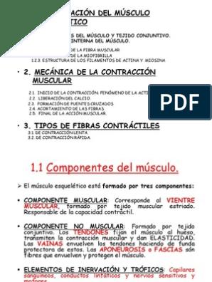 Fisiologia De La Contraccion Muscular Músculo Actina