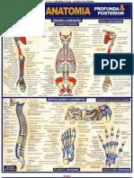 Resumao - Anatomia Profunda e Posterior