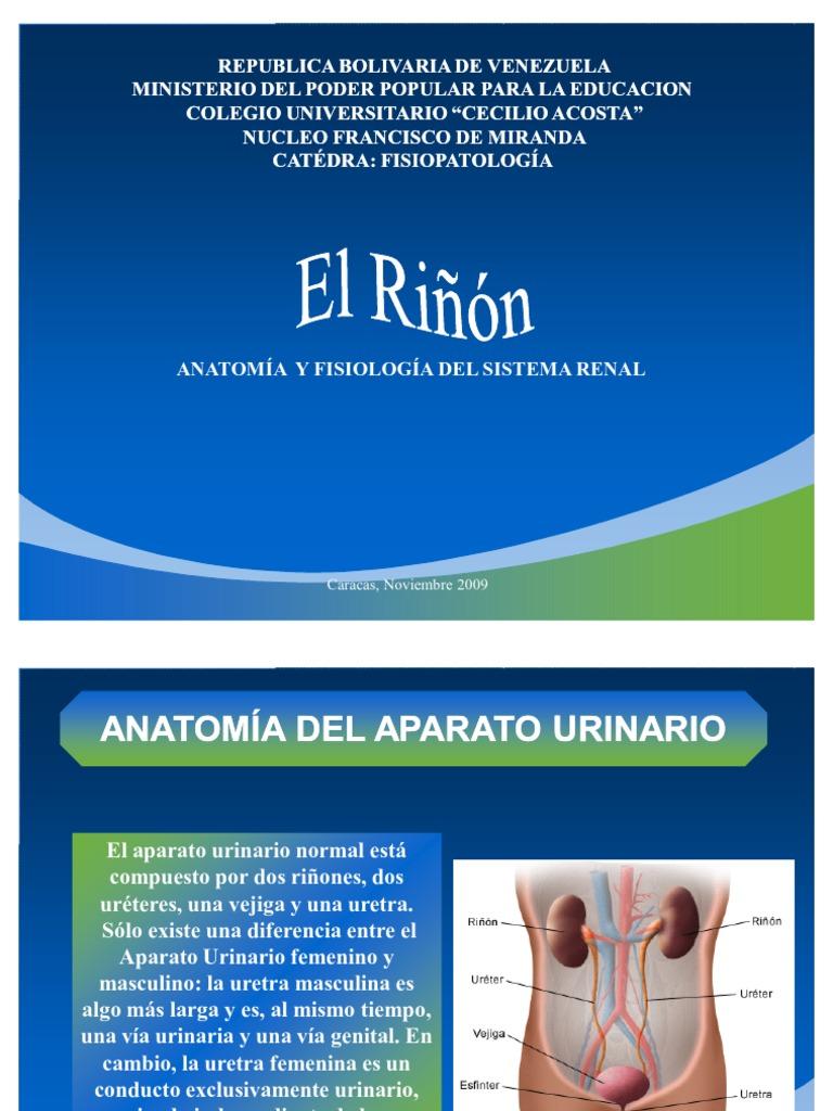 El Riñon Anatomia y Fisiologia