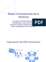 2-Bases Cromosomicas de La Herencia_ppt