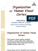Organization of Human Visual Cortex
