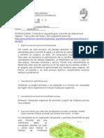 2011_guía3_fotosintesis