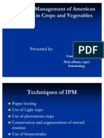 IPM of American Bollworm