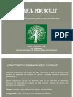 Stejar pedunculat -