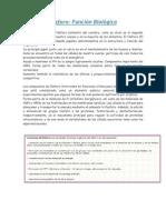 Fósforo_Funciones Biológicas