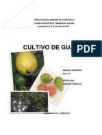 CULTIVO DE GUAYABA