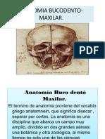 Anatomia Bucodentomaxilar