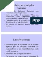 Presenta Humedales Ucudal Oct2010