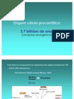 Aula_procariotos