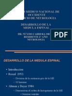 embrio medula