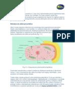 Celulas procarioticas