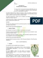 Laboratorio_de_Anatomía_de_FLOR_FEMENINA