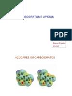 FISIO_3-_Carboidratos_e_Lipidios