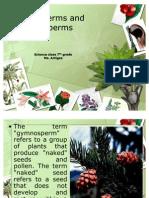 Gymnosperms and Angiosperms