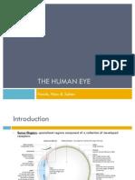 A2 Biology Unit 5- The Eye Presentation