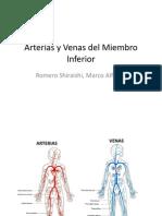 Arterias y Venas Del Miembro Inferior