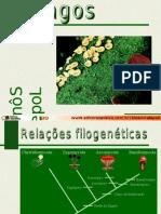 Fungos - Sonia Lopes