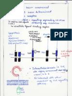 t Lymphocytes Immunology)