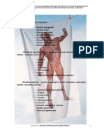 generalitati anatomice