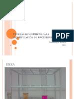 Pruebas bioquímicas Baterias Microbiologia