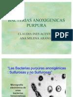 Bacterias_anoxigenicas