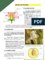5.La_reproduccion_de_las_plantas