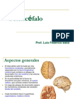 6-Batiz-Neuroanatomia-Telencefalo