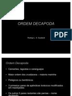 Zooplâncton - ORDEM DECAPODA