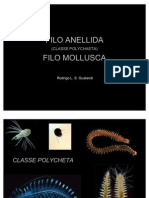 Zooplâncton - Polychaeta e Mollusca (laboratorial)