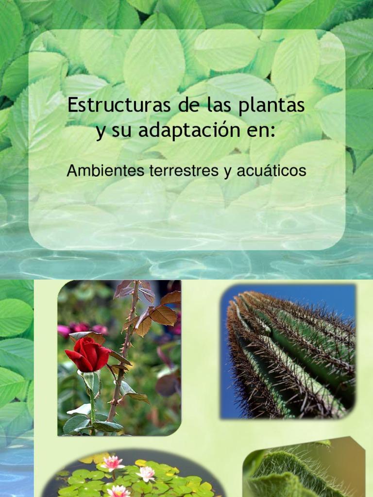 Adaptaci n de las plantas al ambiente for Para que se utilizan las plantas ornamentales