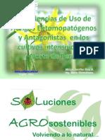 Experiencias de Uso de Hongos Entomopatógenos y Antagonistas en los Cultivos Intensivos del Norte de Perú