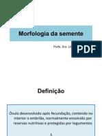 Morfologia da semente