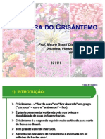 Aula Crisantemo UFPR 2011/1