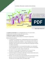 Dinámica y fluidez de la membrana