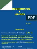Clase 3 Carbohidratos y Lipidos BC 2011 97 2003
