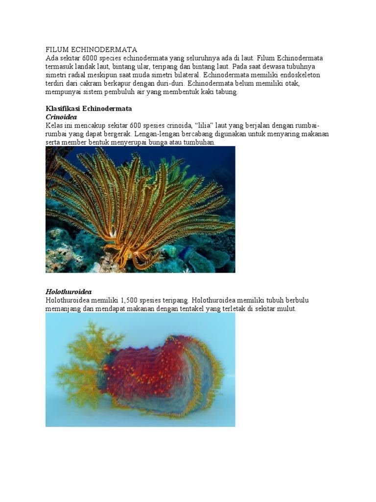 86 Koleksi Gambar Binatang Landak Laut HD