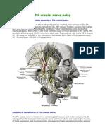 7th Cranial Nerve Palsy