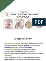 7_aparato_reproductor