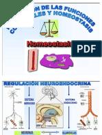Homeostasis 2