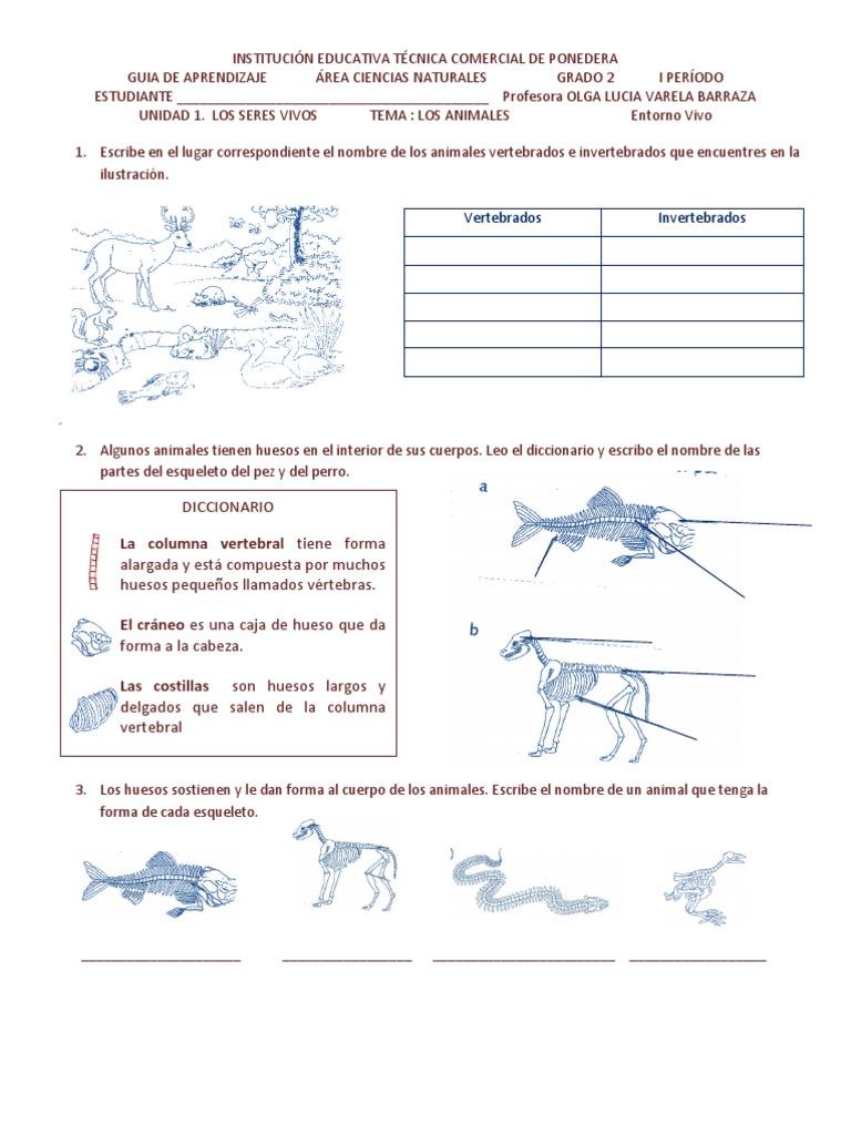 Animales Vertebra Dos e In Vertebra Dos