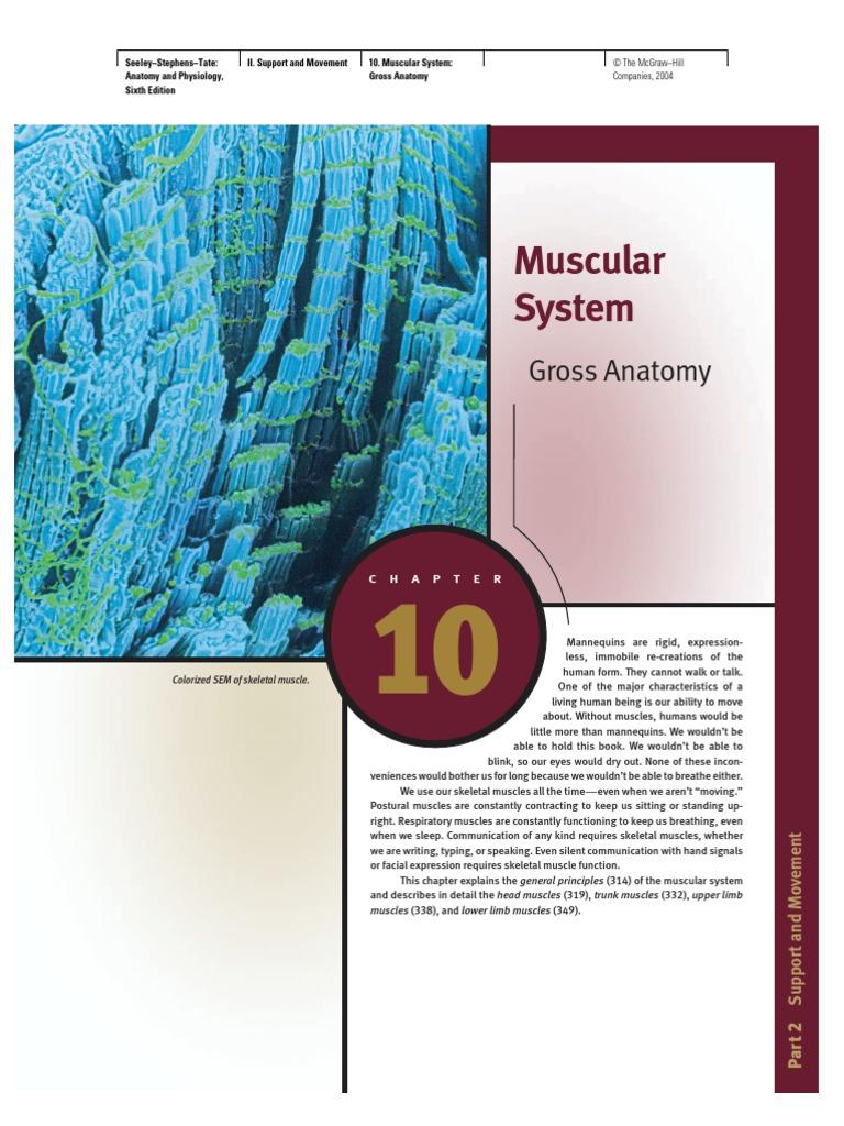 10 Muscular System Gross Anatomy Vertebra Tongue