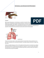 Órganos del Cuerpo y sus Componentes Psicológicos