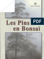 Les Pins en Bonsai