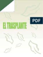 El trasplante