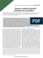 Origin of Plasmodium in Gorillas