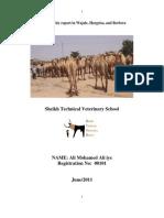 Ali  mahamed alli iye Field Report of wajaale,hargeisa ,berbera